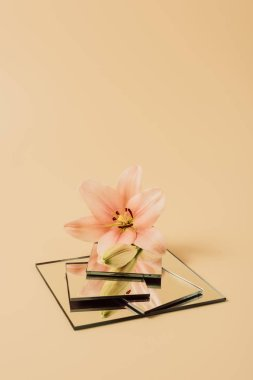 lily flower reflecting in mirrors on beige table