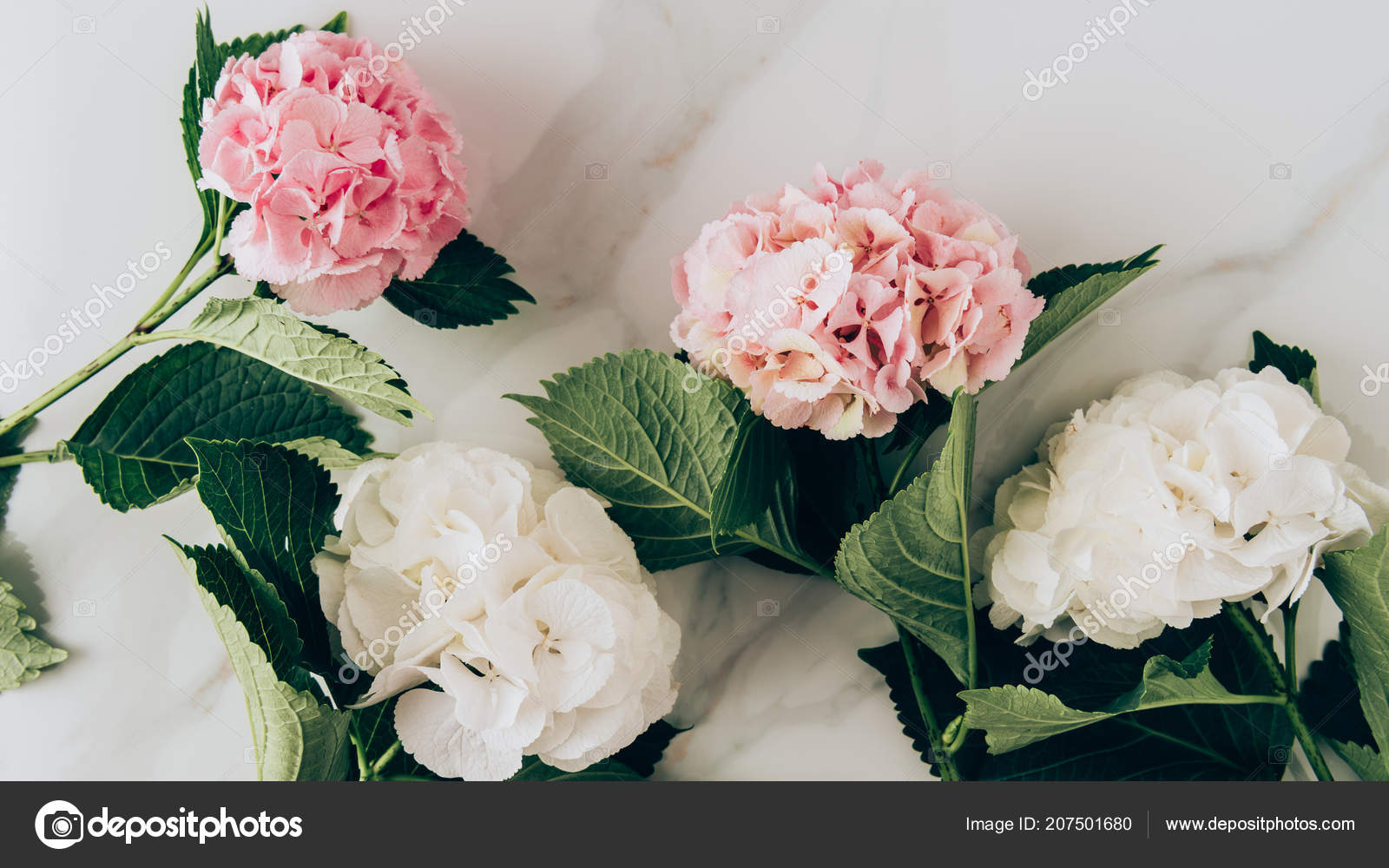 Top View Pink White Hydrangea Flowers Marble Surface Stock Photo