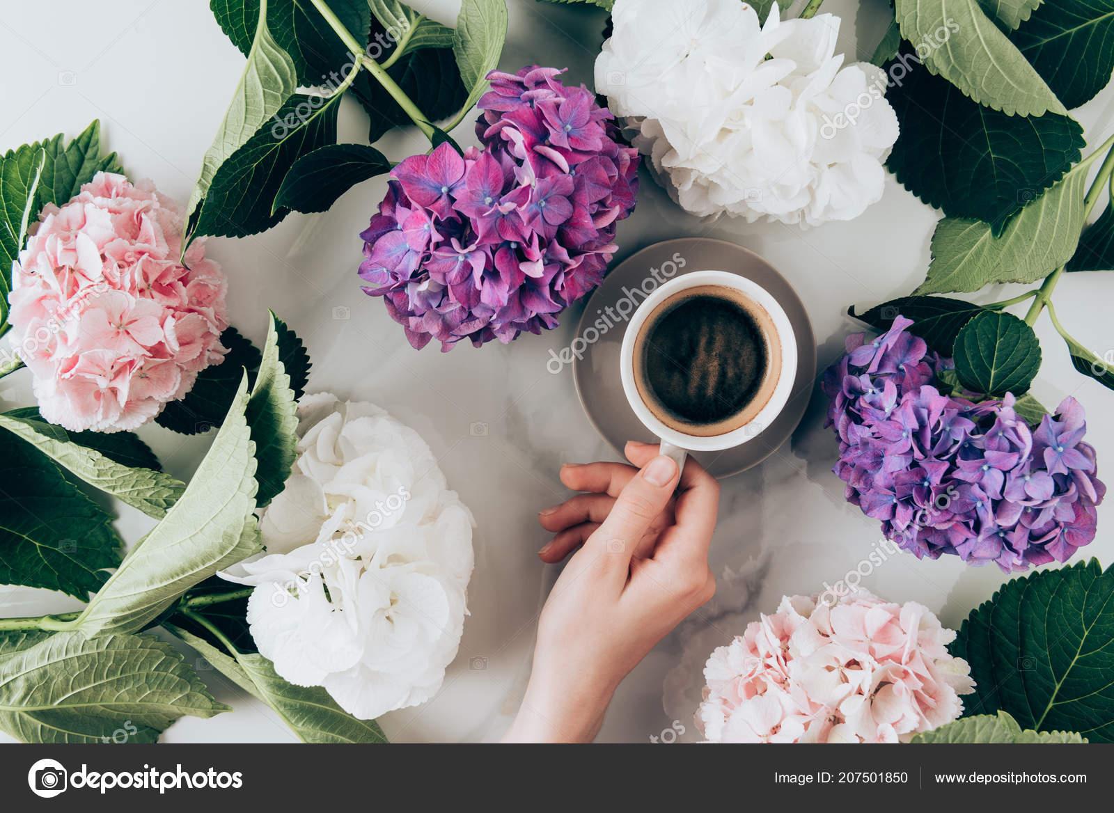 Lay Plate Avec Des Fleurs Hortensia Une Main Feminine Avec