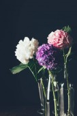 pink, white and purple hortensia bloom in glass vases, on black