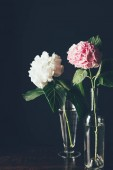 Fényképek pink and white hortensia flowers in glass vases, on black