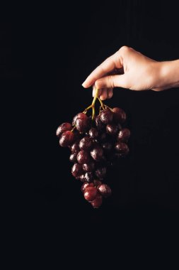 cropped shot of person holding fresh ripe juice grapes isolated on black