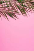 Fényképek lapos feküdt a zöld Pálma levelek a rózsaszín háttér