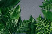 Fotografia lay flat con fogliame verde assortiti con gocce dacqua sul contesto grigio