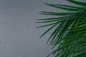Fotografie plochý ležela s exotické palmové listy s čůrky uspořádány na šedém pozadí