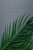 flat lay with exotic palm leaves with water drops arranged on grey backdrop