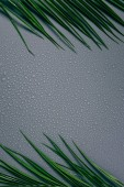 Photo top view of green palm leaves and water drops on grey backdrop