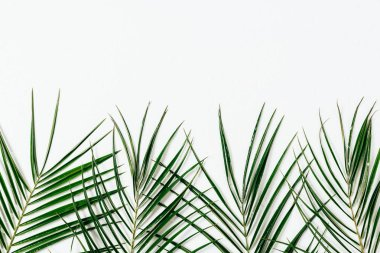 Top view of green palm leaves arranged on white backdrop stock vector