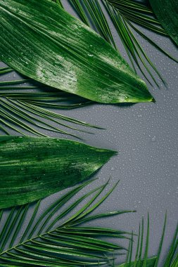 flat lay with assorted green foliage with water drops on grey backdrop