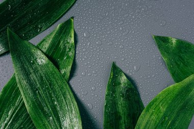 flat lay with arranged green foliage with water drops on grey backdrop
