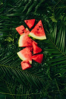 top view of red watermelon slices on dark green palm leaves