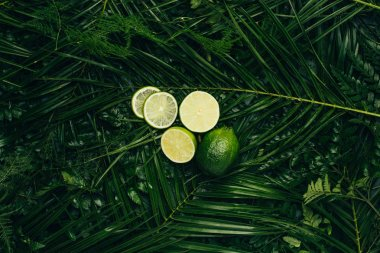 top view of fresh limes on green palm leaves
