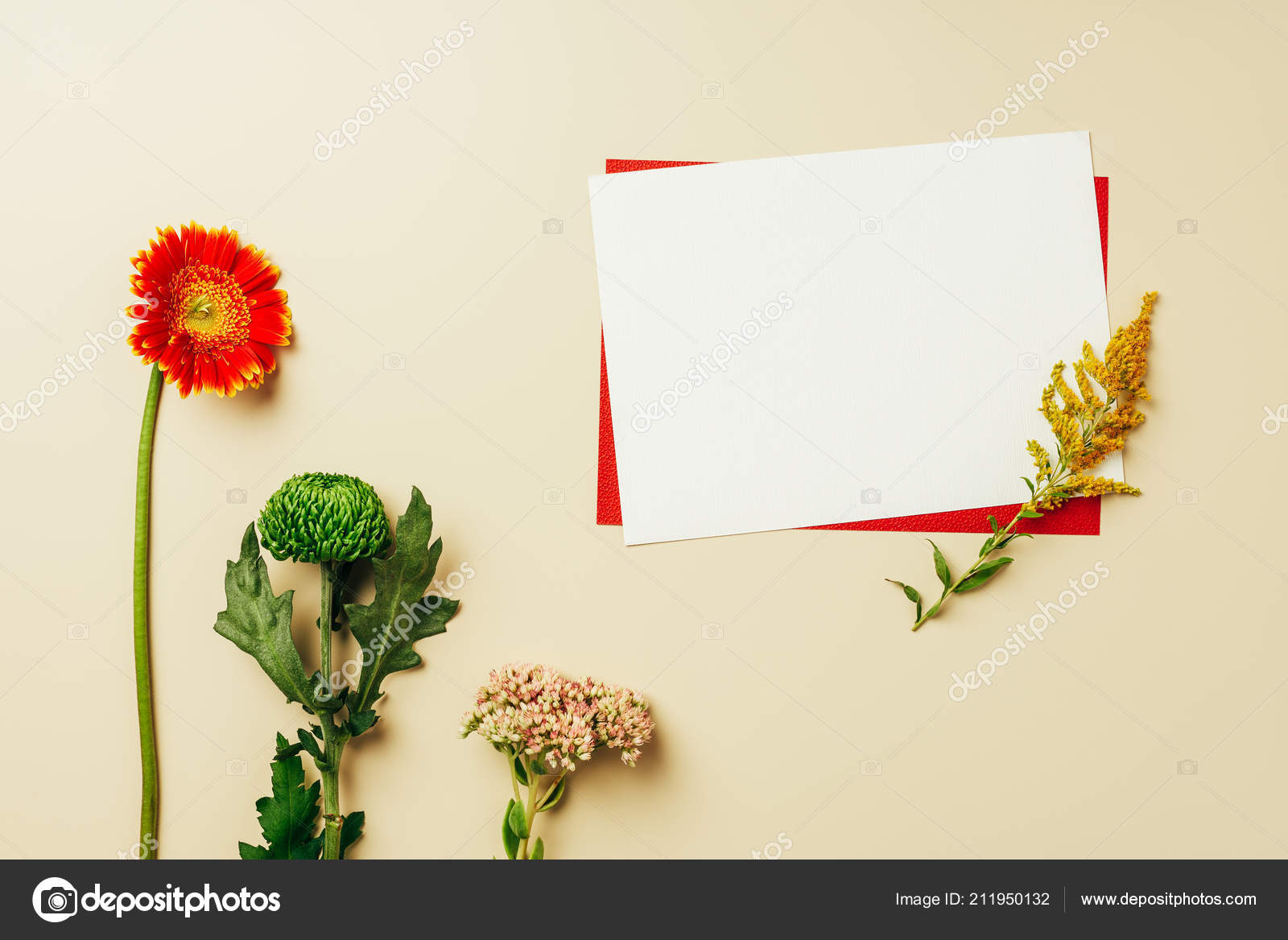 Flat Lay Arrangement Red White Blank Cards Beautiful Flowers Beige