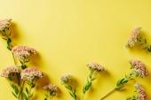 lapos feküdt a sárga háttér gyönyörű vadvirágok elrendezése