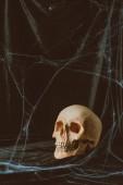 Fotografie strašidelný halloween lebka na černém plátně s pavučina
