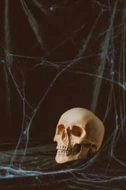 creepy halloween skull on black cloth with spider web