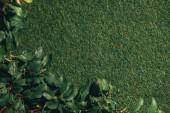 Fotografie Pohled shora na jabloni listy na zelené trávě pozadí