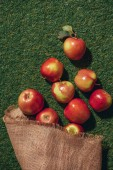 Photo top view of red apples with sacking cloth on green grass