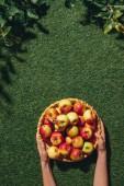 oříznutý pohled ženy držící dřevěná miska s jablky na zelené trávě s apple tree listy