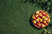Fotografie fresh apples in wicker basket with apple tree leaves on grass background