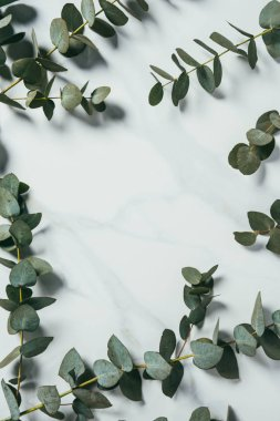 top view of eucalyptus leaves on white background