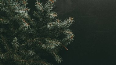 green fir branches on dark background