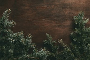 traditional pine branches on dark wooden background