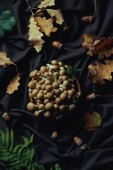 top view of raw edible autumnal mushrooms in bowl on dark fabric