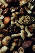Fotografie Draufsicht der sortierten roh essbaren Pilze, full-Frame-Hintergrund