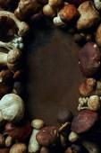 Fotografie pohled shora různých čerstvých jedlých hub na tmavém pozadí