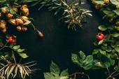 plochý ležela s podzimní rostliny uspořádání na černém pozadí