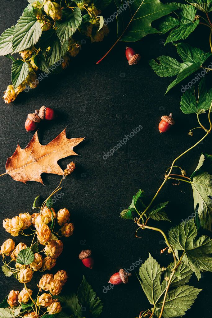 Flat lay with autumn plants arrangement on black background stock vector