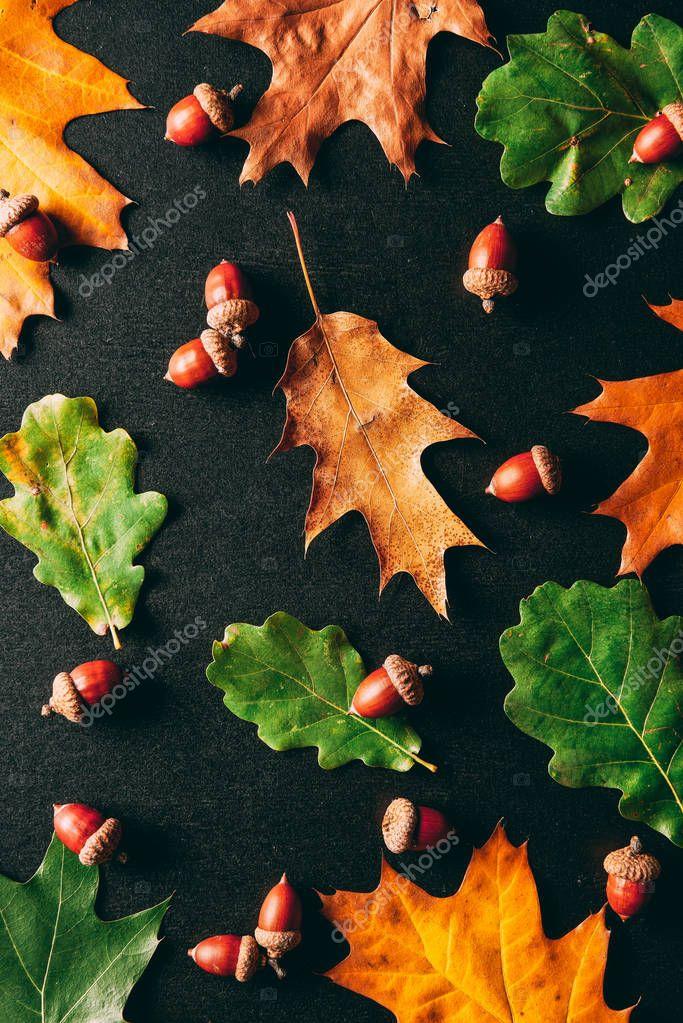 Full frame of acorns and oak leaves on black background stock vector
