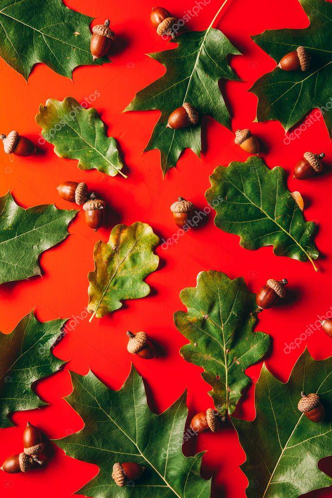 Full frame of green oak leaves and acorns arrangement on red background stock vector