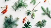 lapos feküdt téli elrendezése fenyő fa ágai és a fehér hátteret homoktövis
