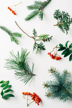 flat lay with winter arrangement of pine tree branches and sea buckthorn on white backdrop