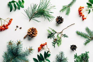 flat lay with winter arrangement of pine tree branches, cones and sea buckthorn on white backdrop