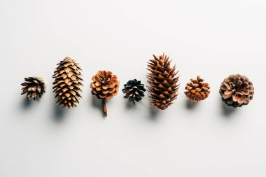 top view of pine cones arranged on white backdrop