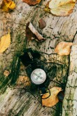 top view of compass on aged rustic tree bark with foliage