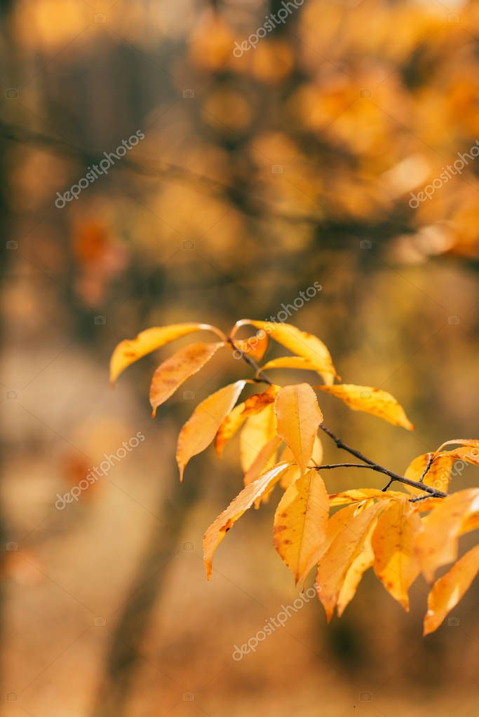 orange autumn foliage on blurred background