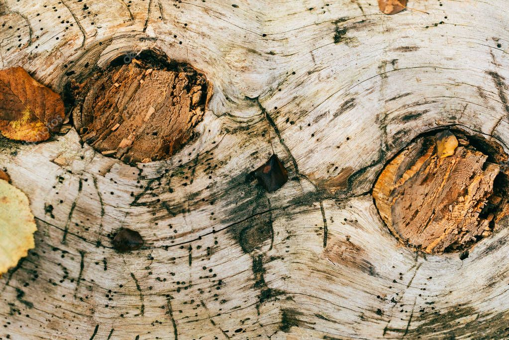close up view of aged cracked brown tree bark