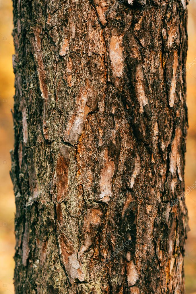 close up view of cracked brown tree bark
