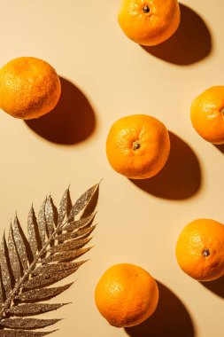 Top view of tangerines and golden twig on beige backdrop