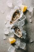 Fotografie Draufsicht der Austern, geschnittene Zitrone und Eiswürfel auf grau Tischplatte