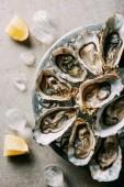 Fotografie Ansicht von oben angeordneten Austern in Schüssel geben, Eiswürfel und Zitrone Stücke auf grau Tischplatte