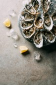 Photo top view of arranged oysters in bowl, ice cubes and lemon pieces on grey tabletop