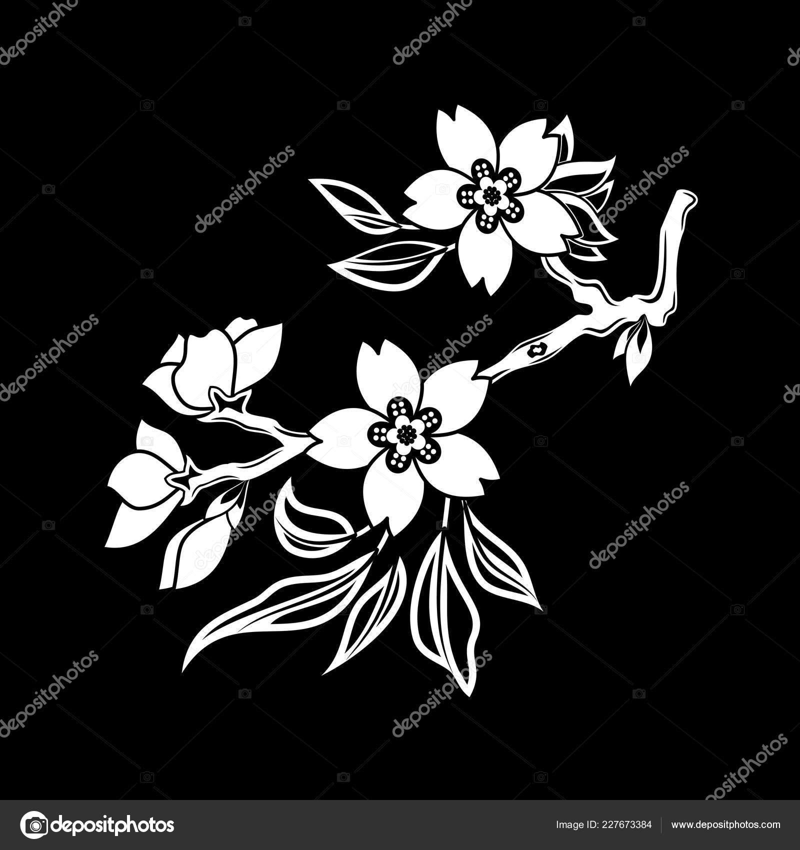 Image Vectorielle Une Fleur Cerise Oriental Sur Fond Noir Sakura