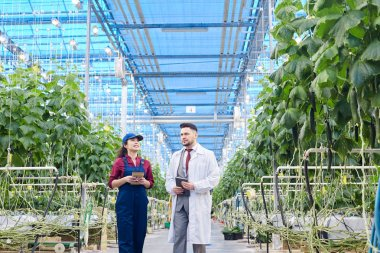 Wide angle portrait of chief agricultural engineer wearing lab coat talking to female worker on vegetable farm, copy space