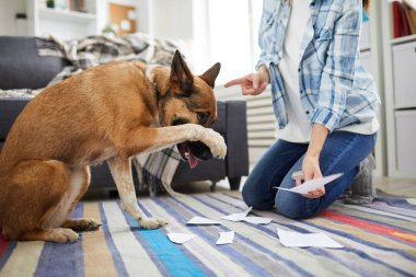 Portrait of unrecognizable woman telling off dog for making mess at home, copy space