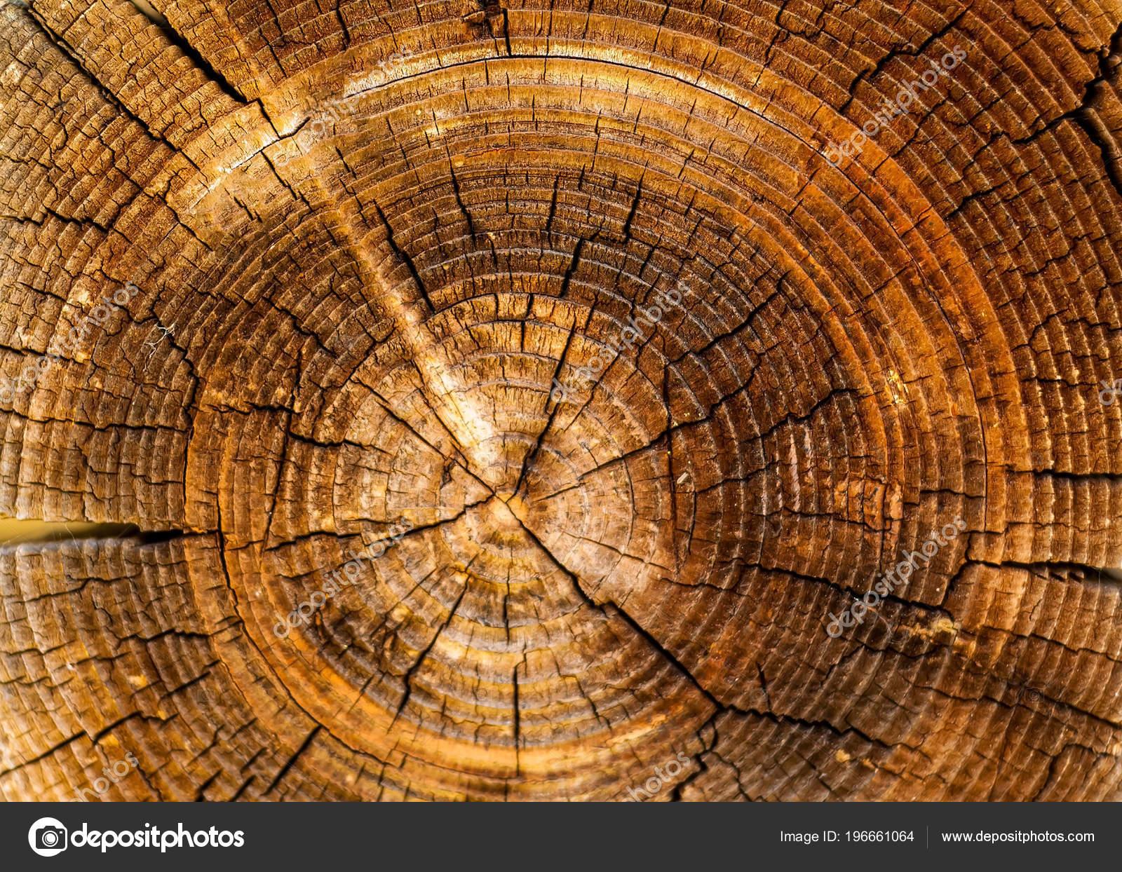 Materiaux Naturel fond authentique avec des profils de bois naturel, le concept de